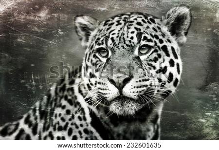 Jaguar (Panthera Onca), on textured grunge background - stock photo