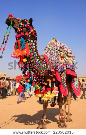 JAISALMER, INDIA - FEBRUARY 16: Camel on display during Desert Festival on February 16, 2011 in Jaisalmer, India. Main purpose of the Festival is to display rich and colorful culture of Rajasthan