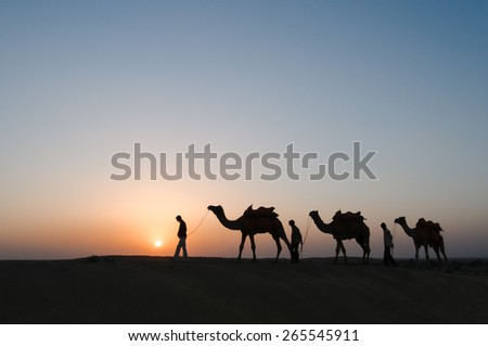 JAISALMER, INDIA - NOVEMBER 15,2008: Silhouette of unidentified local people and camels at sunset on November 15,2008 in Thar desert near Jaisalmer, Rajasthan, India.