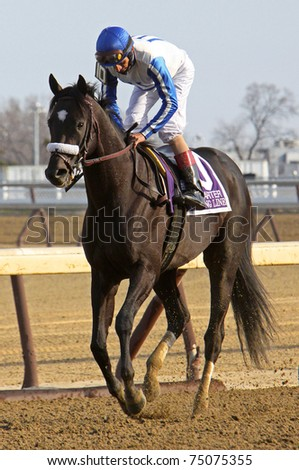 """JAMAICA, NY - APR 9: Jockey John Velazquez guides """"Morning Line"""" back to the start after the pair wins The Carter Handicap at Aqueduct Race Track on Apr 9, 2011 in Jamaica, NY. - stock photo"""