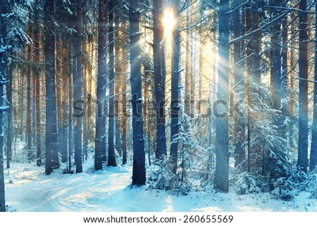 January winter landscape in the forest - stock photo