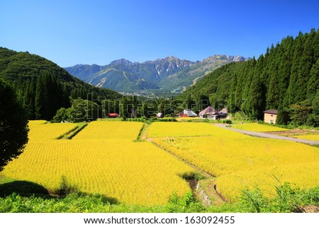 Japan Alps and rice field, Hakuba village, Nagano, Japan - stock photo