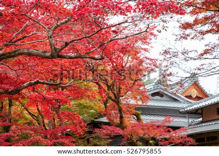 Japan autumn season with architecture in the park at Kyoto, Japan, Autumn season.