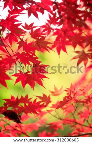 Japan, colored leaves