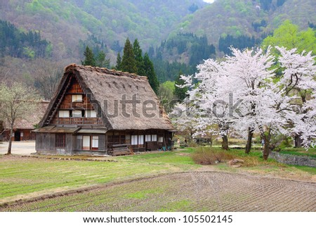 Japan - house with thatched roof and cherry blossom (sakura) in Shirakawa-Go, famous village listed as UNESCO World Heritage Site. Gifu prefecture. - stock photo