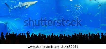 Japan Okinawa aquarium in the ocean park - stock photo