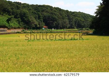 japan satoyama landscape ad rice paddy - stock photo