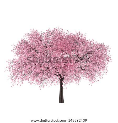Japan tree sakura isolated. Pink color. Prunus cerasus - stock photo