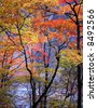 Japanese autumn scenery in mountain park-15 - stock photo
