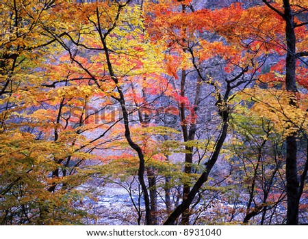 Japanese autumn scenery in mountain park-16 - stock photo