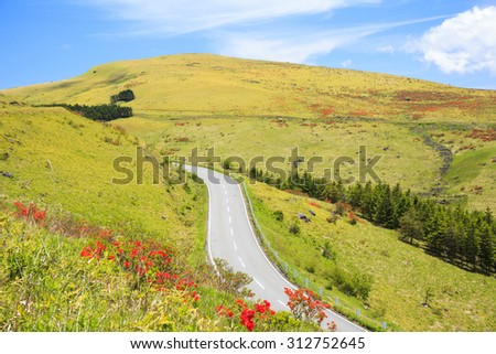 Japanese azalea at Kirigamine highland, Venus line, Nagano, Japan - stock photo