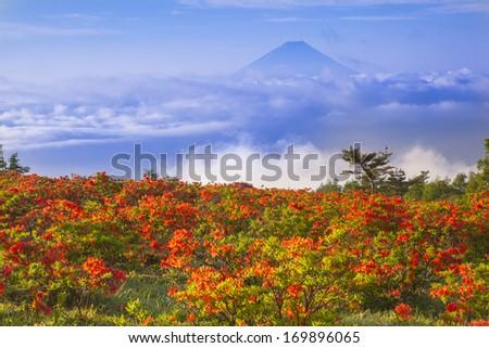 Japanese azalea with Mt. Fuji, Yamanashi, Japan - stock photo
