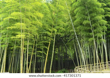 Japanese bamboo forest - stock photo