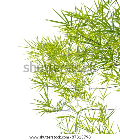 Japanese bamboo leaves on thin twigs isolated on white - stock photo