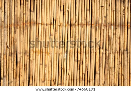 Japanese bamboo texture good for background - stock photo