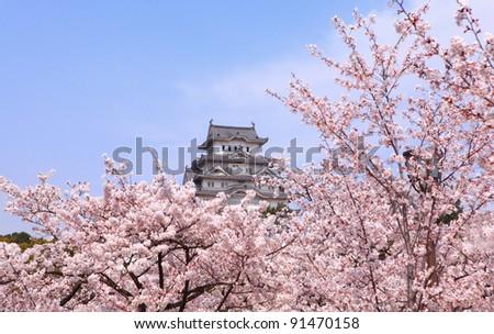 Japanese castle and Beautiful pink cherry blossom (sakura) shot in japan - stock photo