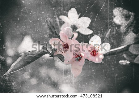 Japanese cherry blossom in vintage style