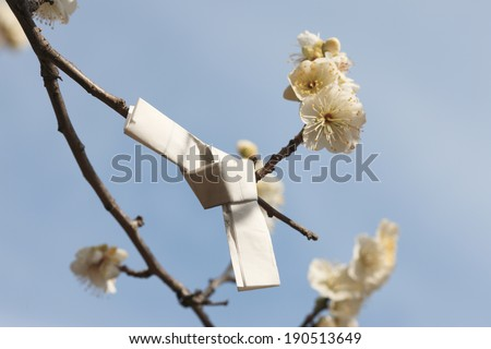 Japanese fortune paper on plum tree