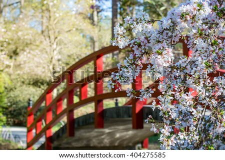 japanese garden bridge and cherry tree