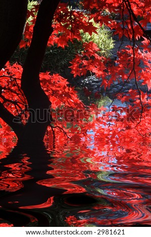 Japanese garden with bright red maple and dark branches. - stock photo