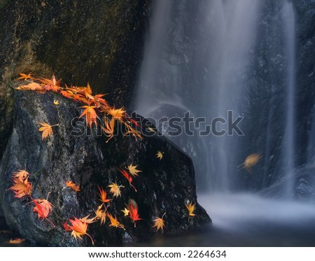 Japanese garden with bright red maple on a rock with waterfall. Slow shutterspeed on a tripod. - stock photo
