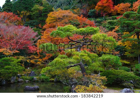 Japanese garden with colorful maple - stock photo