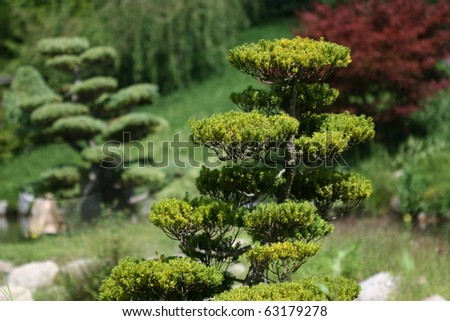 Japanese garden with focus on typical tree in foreground. Background out of focus. - stock photo