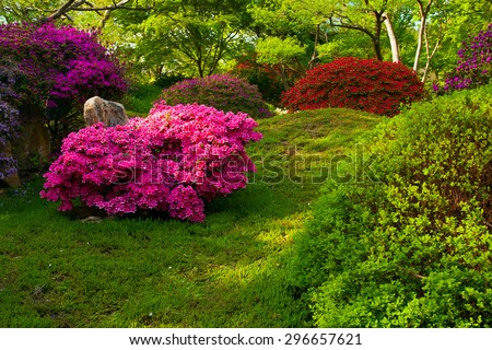 Japanese garden with purple bush in Prague botanic Garden, Troja - stock photo