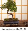 Japanese interior with bonsai tree and pruning scissors - stock photo