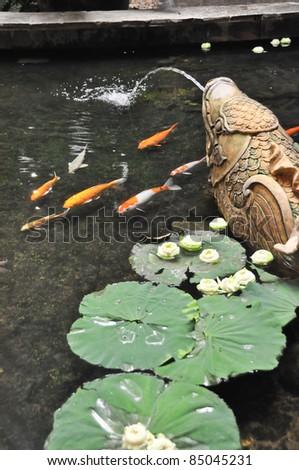 japanese koi fish japanese koi fish - stock photo
