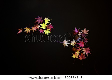 japanese maple leaves on water surface - stock photo