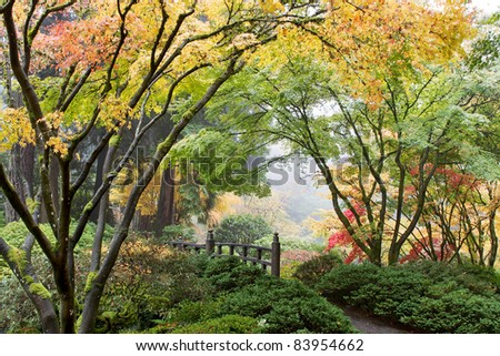 Japanese Maple Tree Canopy by the Bridge in Fall - stock photo