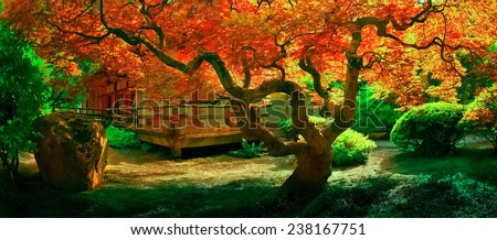 Japanese maple tree in a garden, displaying full fall colors. - stock photo