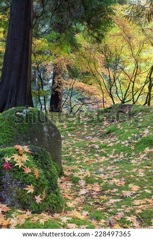 Japanese Maple Tree Leaves on Mossy Rocks and Ground in Fall Season at Portland Japanese Garden - stock photo