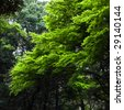 Japanese maple trees in Tokyo - stock photo