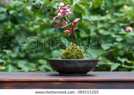Japanese Moss Bonsai  - stock photo