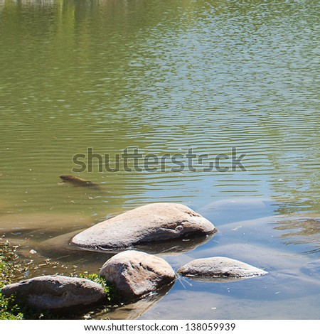 Japanese pond with carps and stones - stock photo