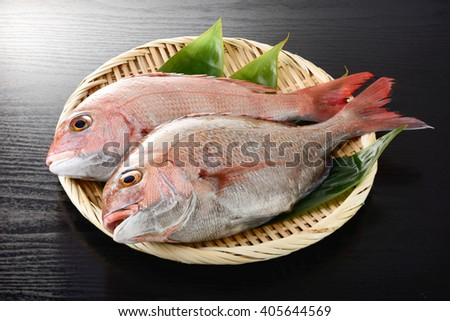 japanese red sea bream