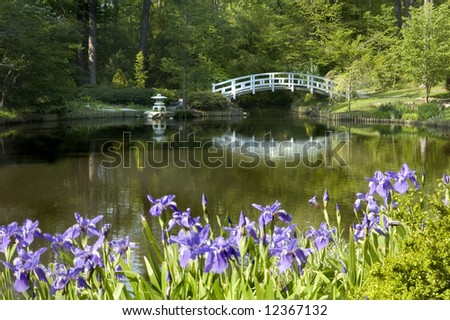 japanese zen garden with bridge and purple iris