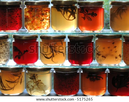 Jars of herbal jelly and jam  on glass shelves in window backlit by sunlight - stock photo