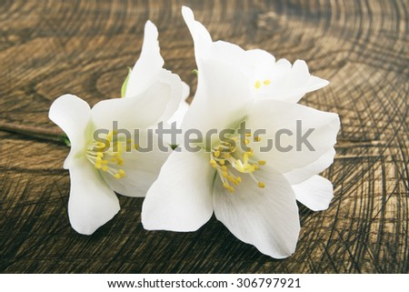 Jasmine flowers on a dark wood background. toning. selective focus  - stock photo