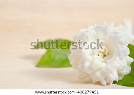 Jasmine (Other names are Jasminum, Melati, Jessamine, Oleaceae) flower isolated on wooden board