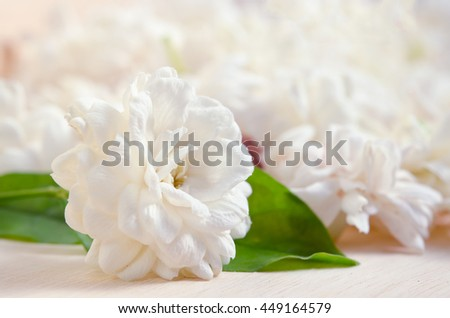 Jasmine (Other names are Jasminum, Melati, Jessamine, Oleaceae Jasmine) flowers grouped on wooden board background