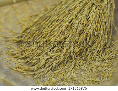 Jasmine paddy (selective focus and shallow DOF) on a traditional mat. - stock photo