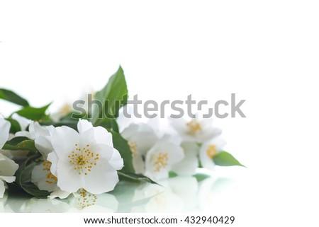 jasmine white flower - stock photo