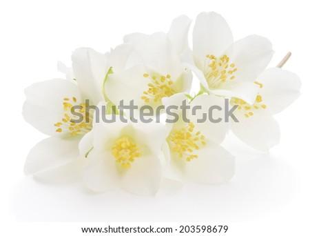 jasmine white flower isolated on white background - stock photo