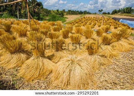 Jatiluwih rice terrace in Bali, Indonesia - stock photo