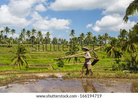 JAVA, INDONESIA CIRCA JUNE 2012- A farmer carries his plow through ricefields, on 24 June 2012, in Java, Indonesia.