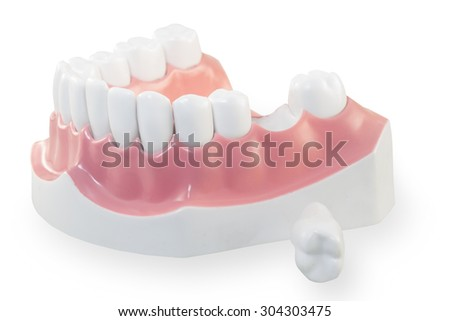 jaws model - stock photo