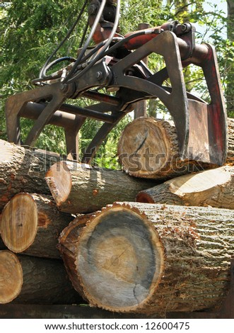 Jaws of a crane loading logs onto a truck - stock photo
